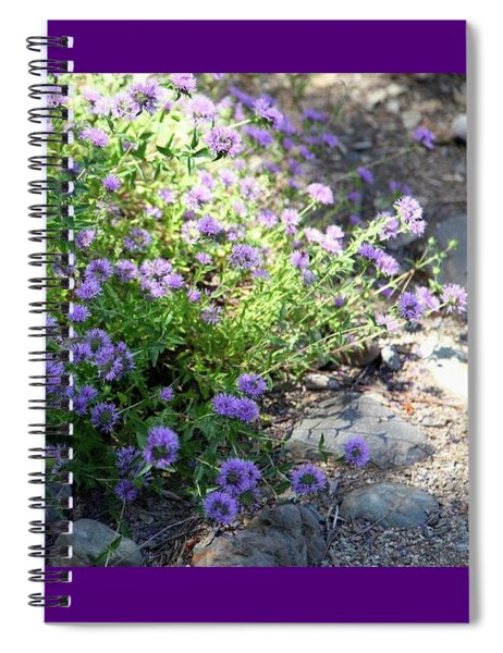 Purple Bachelor Button Flower Spiral Notebook