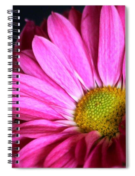 Purple Chrysanthemum Close-up Spiral Notebook