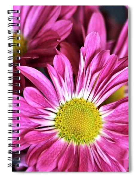 Purple Chrysanthemums Spiral Notebook