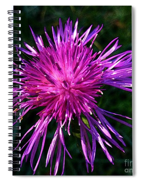 Purple Dandelions 4 Spiral Notebook