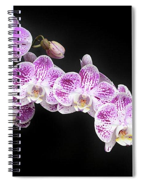 Purple On White On Black Spiral Notebook