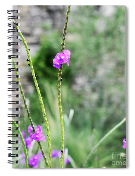 Purple Vebena Spiral Notebook