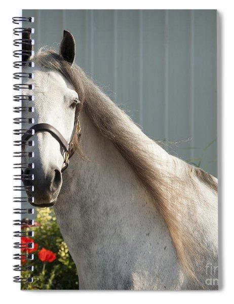 Que Pasa? Spiral Notebook