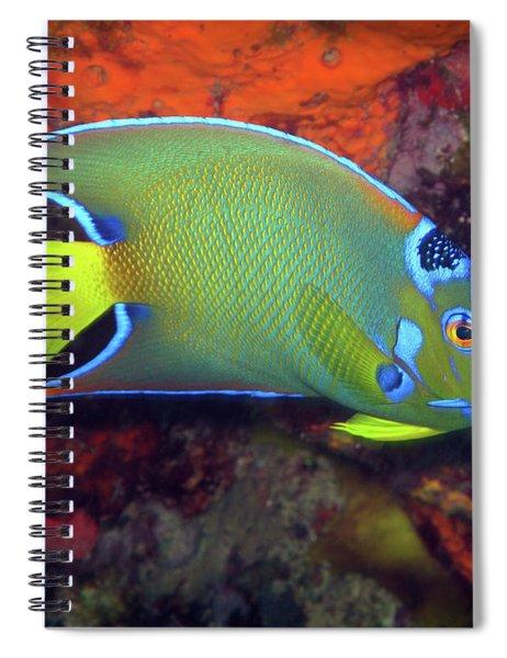 Queen Angelfish, U. S. Virgin Islands 2 Spiral Notebook