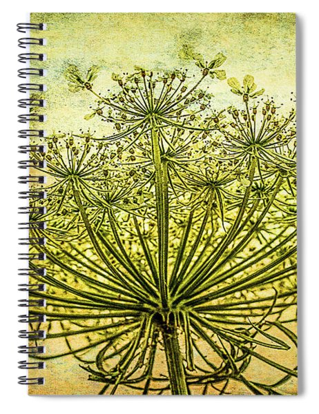 Queen Anne's Lace At Sunrise Spiral Notebook