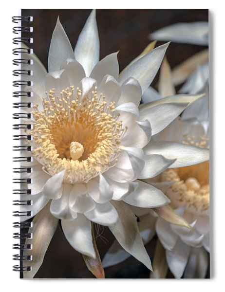 Queen Of The Night Spiral Notebook