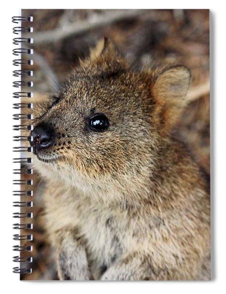Quokka Spiral Notebook
