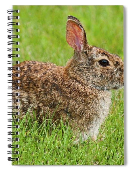 Rabbit In A Grassy Meadow Spiral Notebook