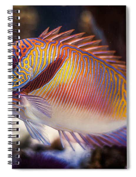 Rabbitfish Spiral Notebook