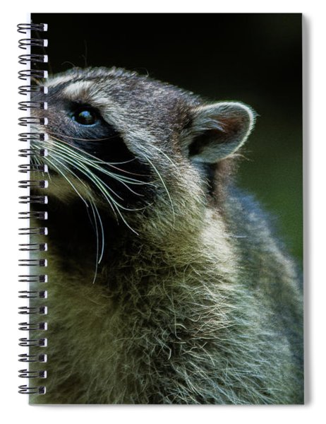 Raccoon 1 Spiral Notebook