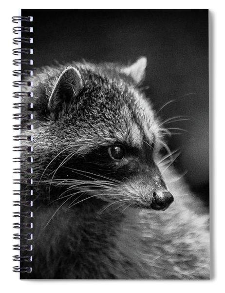 Raccoon 3 Spiral Notebook