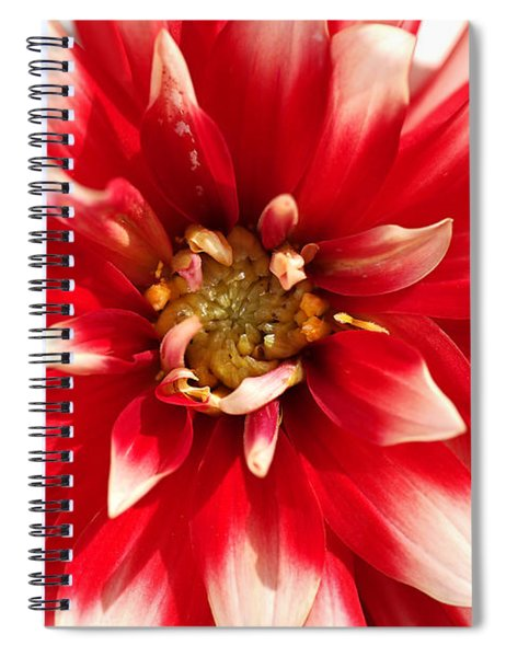 Radiant Dahlia Spiral Notebook