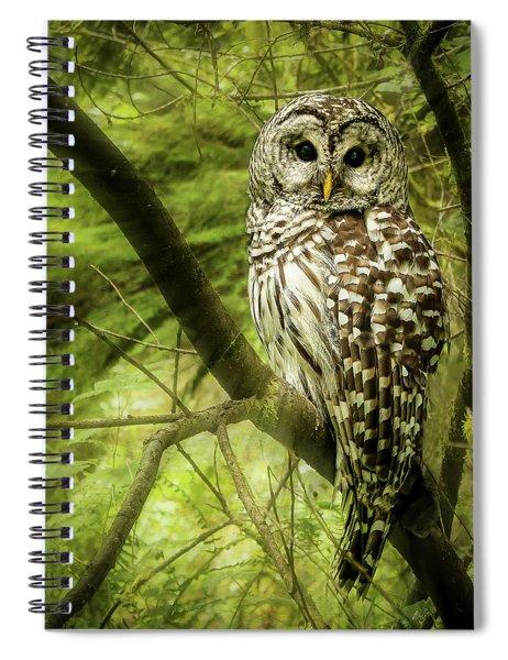 Radiating Barred Owl Spiral Notebook