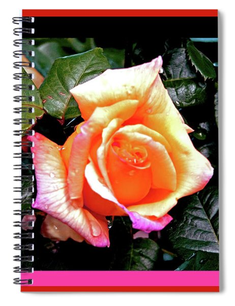 Rain Drops On A Rose Spiral Notebook