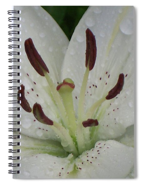 Rain Drops On Lily Spiral Notebook