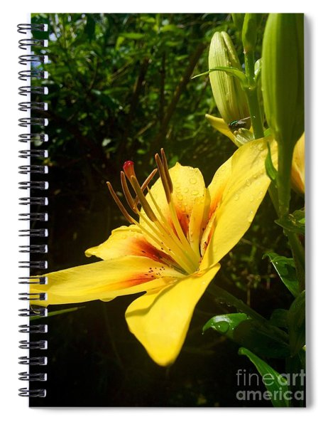 Rain Kissed Tiger Lily Spiral Notebook