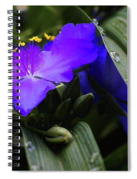 Raindrops On Spiderwort Flowers Spiral Notebook
