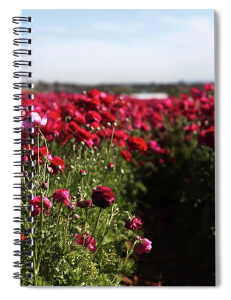 Ranunculus Field Spiral Notebook