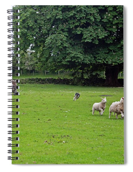 Rounding Up The Sheep Spiral Notebook