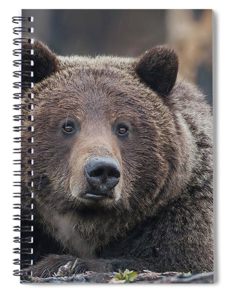 Raw, Rugged And Wild- Grizzly Spiral Notebook