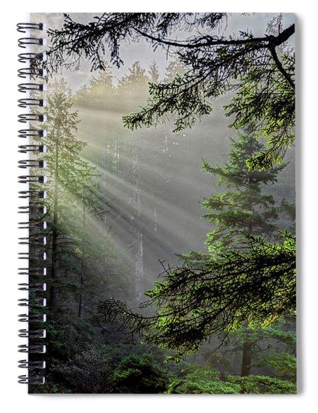 Morning Rays Through An Oregon Rain Forest Spiral Notebook