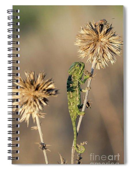 Spiral Notebook featuring the photograph Reach High by Arik Baltinester