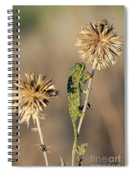 Reach High Spiral Notebook