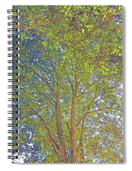 Reaching Skyward In Abstract Spiral Notebook