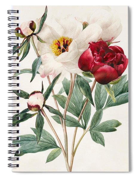 Red And White Herbaceous Peonies Spiral Notebook
