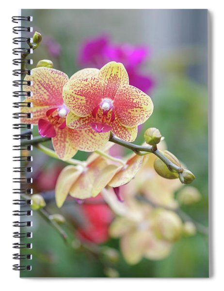 Red And Yellow Flower Spiral Notebook