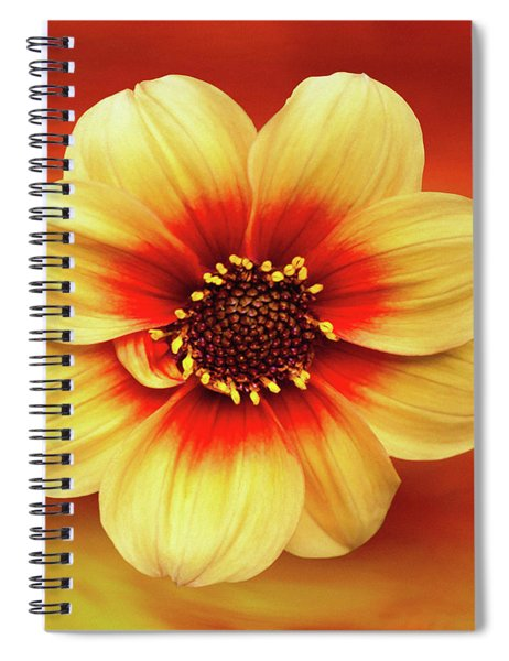 Red And Yellow Inspiration Spiral Notebook