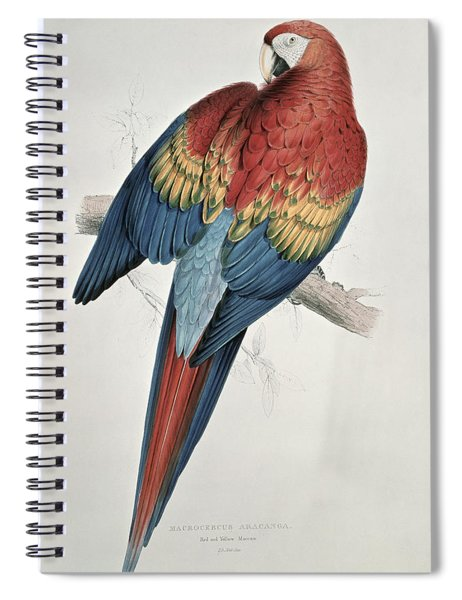 Red And Yellow Macaw  Spiral Notebook