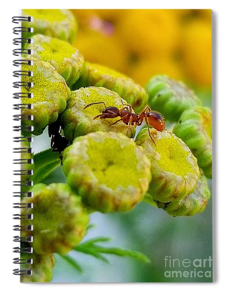 Red Ant Spiral Notebook
