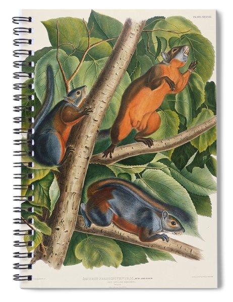 Red Bellied Squirrel  Spiral Notebook