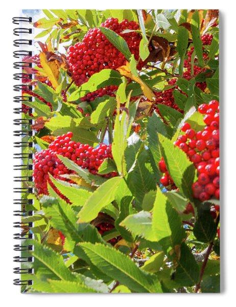 Red Berries, Blue Skies Spiral Notebook