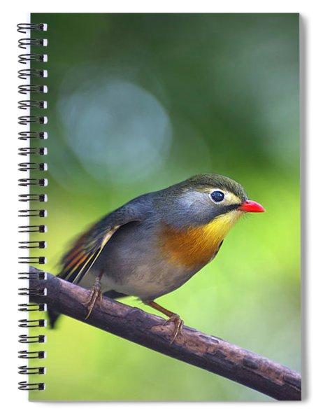 Red Billed Leiothrix Spiral Notebook