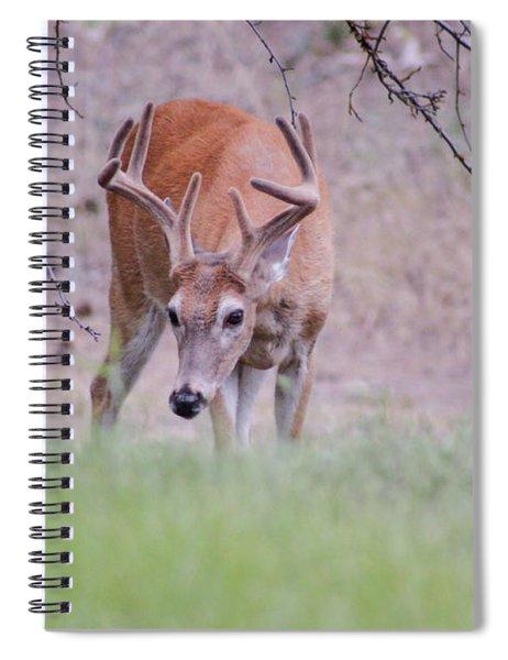 Red Bucks 6 Spiral Notebook by Antonio Romero