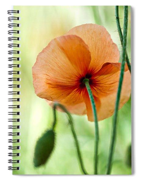 Red Corn Poppy Flowers 02 Spiral Notebook