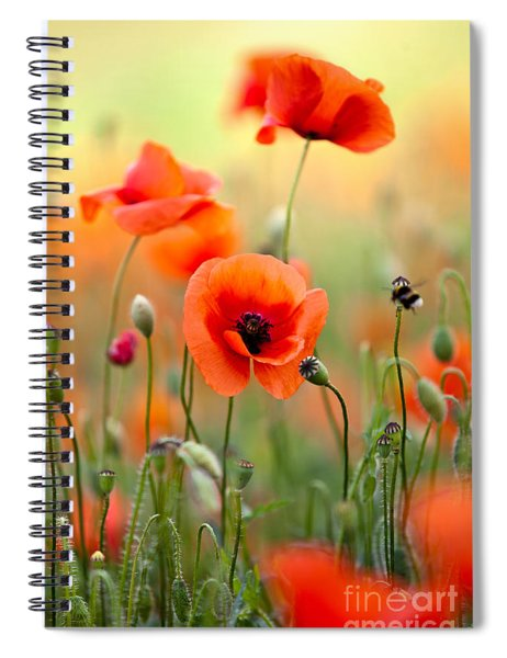 Red Corn Poppy Flowers 06 Spiral Notebook