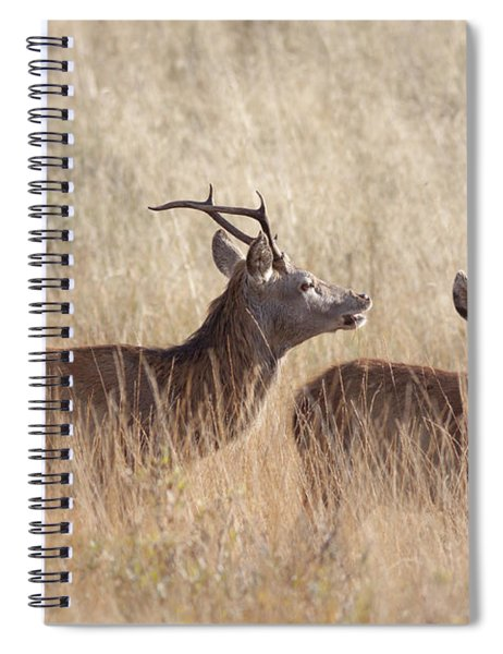 Red Deer Stag And Hind Spiral Notebook