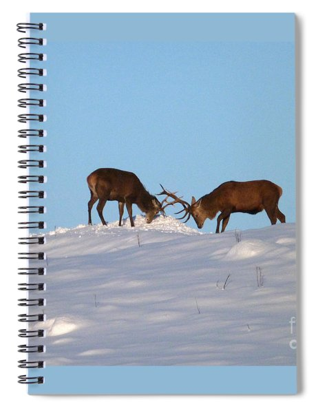 Red Deer Stags - Winter Sparring Spiral Notebook