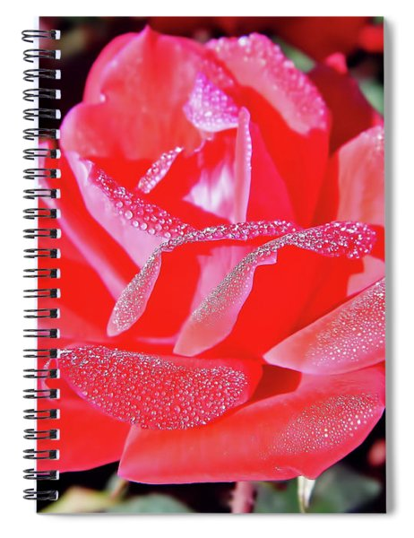 Red - Dew Covered  - Rose Spiral Notebook