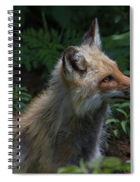 Red Fox In The Forest Spiral Notebook