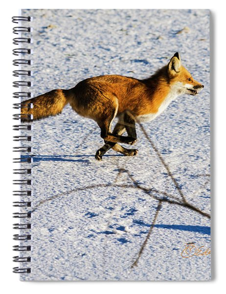 Red Fox On The Run Spiral Notebook