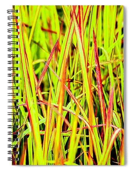Red Green And Yellow Grass Spiral Notebook