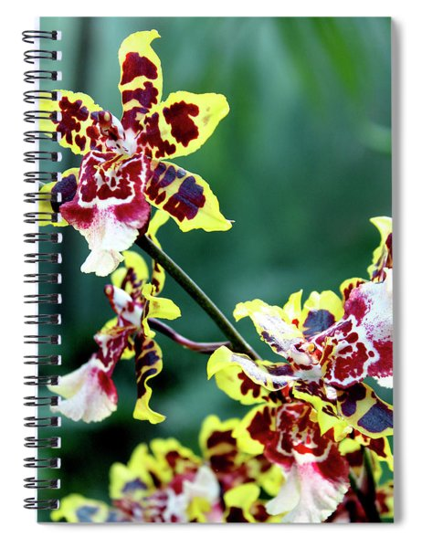 Striped Maroon And Yellow Orchid Spiral Notebook