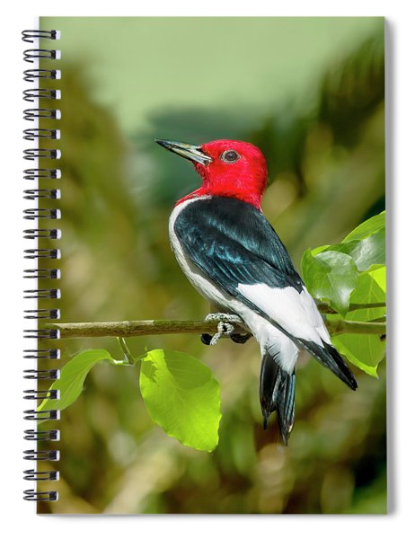 Red-headed Woodpecker Portrait Spiral Notebook