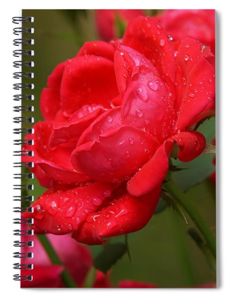 Red Knockout Rose Spiral Notebook by Robert L Jackson