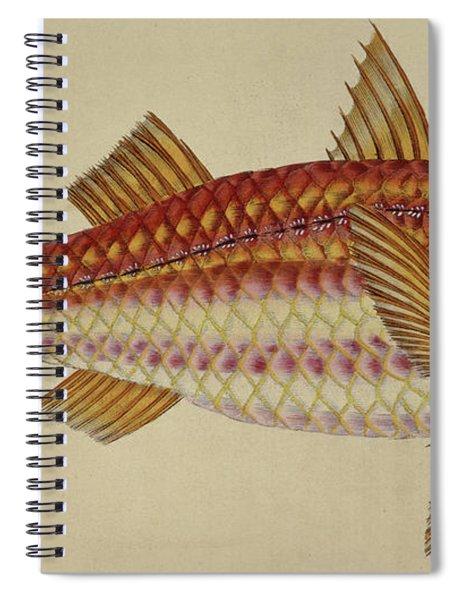 Red Mullet Spiral Notebook