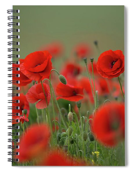 Red On Green Spiral Notebook